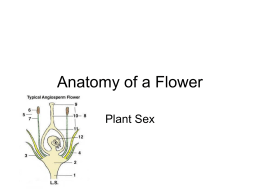 Anatomy of a Flower - Hudson City Schools / Homepage