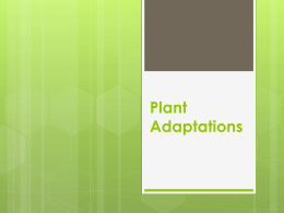 Plant Adaptations - Laguna Middle School
