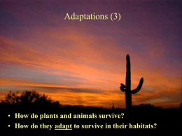 Adaptations (3)