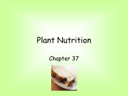 PLANT NUTRITION - Falmouth Schools