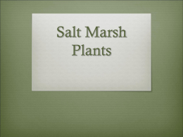 Salt Marsh Plants - Oregon Institute of Marine Biology