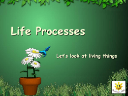 Life Processes - Communication4All