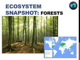 Ecosystem Snapshot – Forests