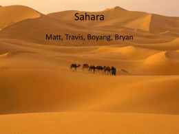 Animals In the Sahara
