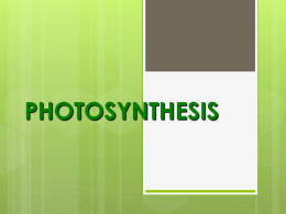 Photosynthesis - Teachers TryScience