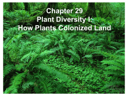 increasing the diversity of plants Recent studies have revealed many potential benefits of increasing plant diversity in natural ecosystems, as well as in agroecosystems and production forests.