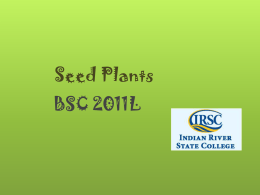 Seed Plants - Biology Department