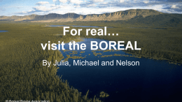 For real… visit the BOREAL