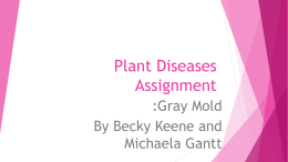 Plant Diseases Assignment