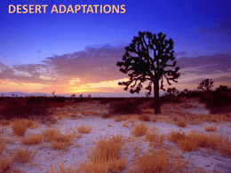 DESERT ADAPTATIONS PLANTS Plants have many adaptations to