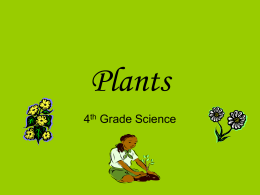 Plants - What`s Up @ Millcreek?