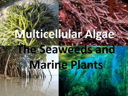 Multicellular Algae: The Seaweeds