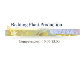 Bedding Plant Production PPT