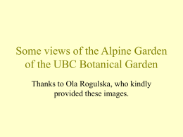 Some views of the Alpine Garden of the UBC Botanical Garden