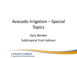 Avocado Irrigation – Special Topics Saliniity