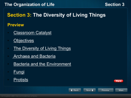 The Organization of Life Section 3 Plants