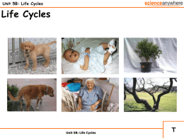 Unit 5b - Life Cycles