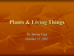 Plants & Living Things - Etiwanda E