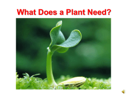 What Does a Plant Need? PowerPoint