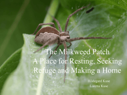 PowerPoint Presentation - The Milkweed Patch A Place for Resting