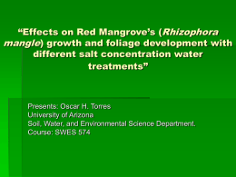 Salinity Effects on Red Mangrove