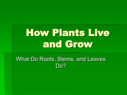 How Plants Live and Grow