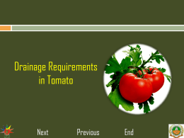 8..Drainage requirement in tomato
