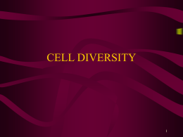 Cell Diversity