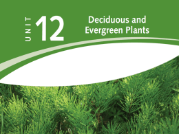 POWER_AND_TECH_files/Unit 12 - Deciduous and Evergreen