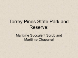 BIO100--TORREY_PINES--MARITIME_SCRUB_and_CHAPARRAL
