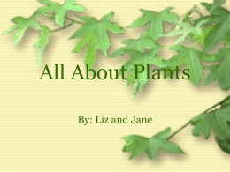 The Parts of a Plant and What Makes a Plant Grow?