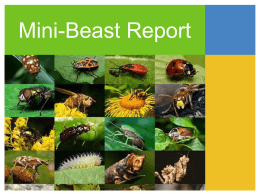 Mini-Beast Report Location classification What does it do how does