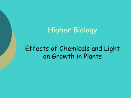 effect-of-chems-light-plants