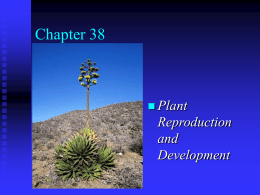 Ch. 38 Plant reproduction and development