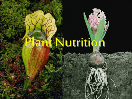 Plants require 9 macronutrients and at least 8 micronutrients