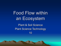 Food Flow w/in an Ecosystem