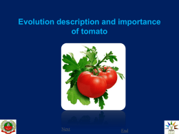 1.Evolution description and importance of tomato