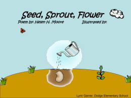 Seed, Sprout, Flower