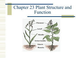 23 Plant Structure and Function teacher ppt