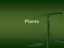 Plants - Needham.K12.ma.us
