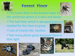 Forest Floor Layer PowerPoint