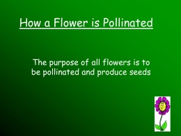 How a Flower is Pollinated