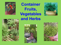 Container Fruits, Vegetables and Herbs