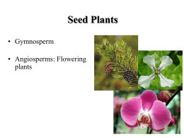 Lecture 12: Gymnosperms and Angiosperms