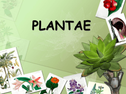plantae - Baldwin Schools Teachers