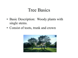 Tree Basics - Milan Area Schools