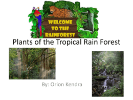 Plants Of The Tropical Rain Forest - cooklowery14-15