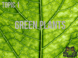 Green_Plants - Papanui High School