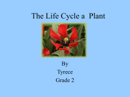 The Life Cycle a Plant