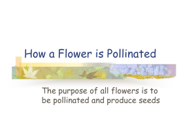 How a Flower is Pollinated?
